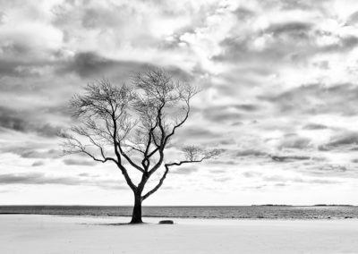 Barren Winter