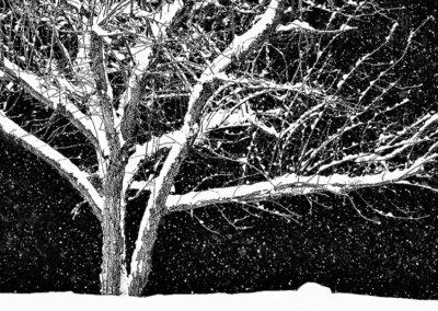 Crabapple in Winter