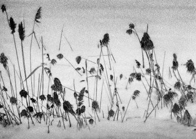 Winter Marsh Grass